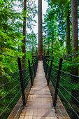 Treetop Suspension Bridge in Capilano Park, British Columbia