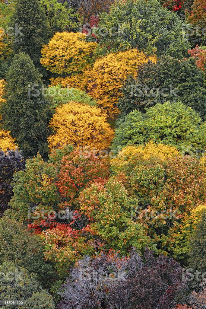 Treetop Vertical royalty-free stock photo