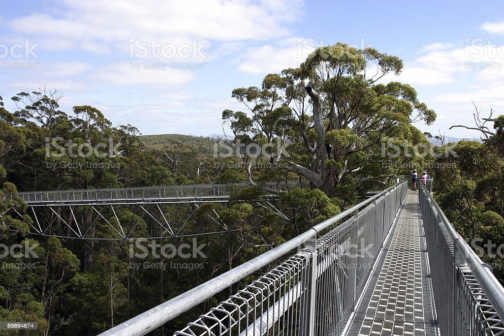 Treetop walk 2 royalty-free stock photo