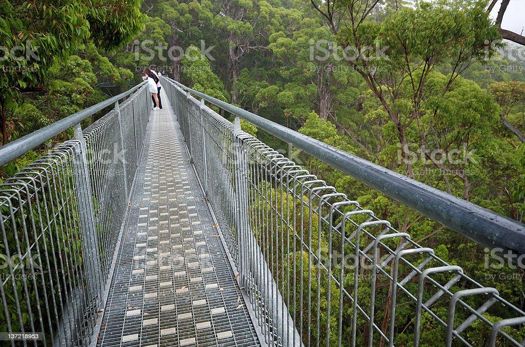 Treetop walk path royalty-free stock photo