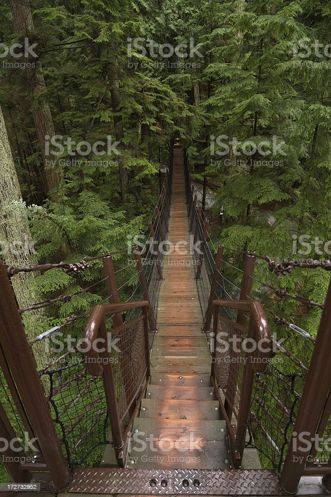 Treetop walk stock photo
