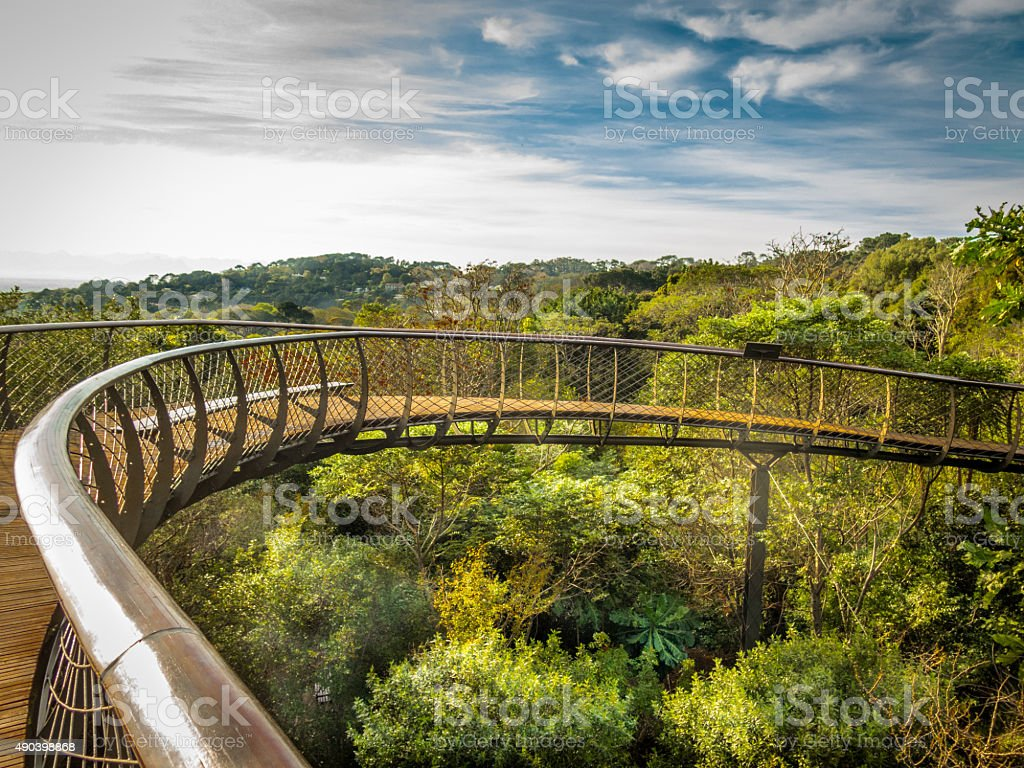 Tree-top walkway. Kirstenbosch Botanical Gardens, South Africa stock photo