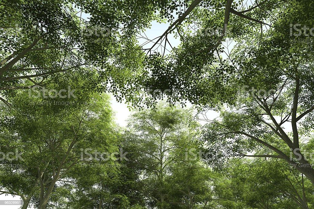 Treetops - Green Canopy stock photo