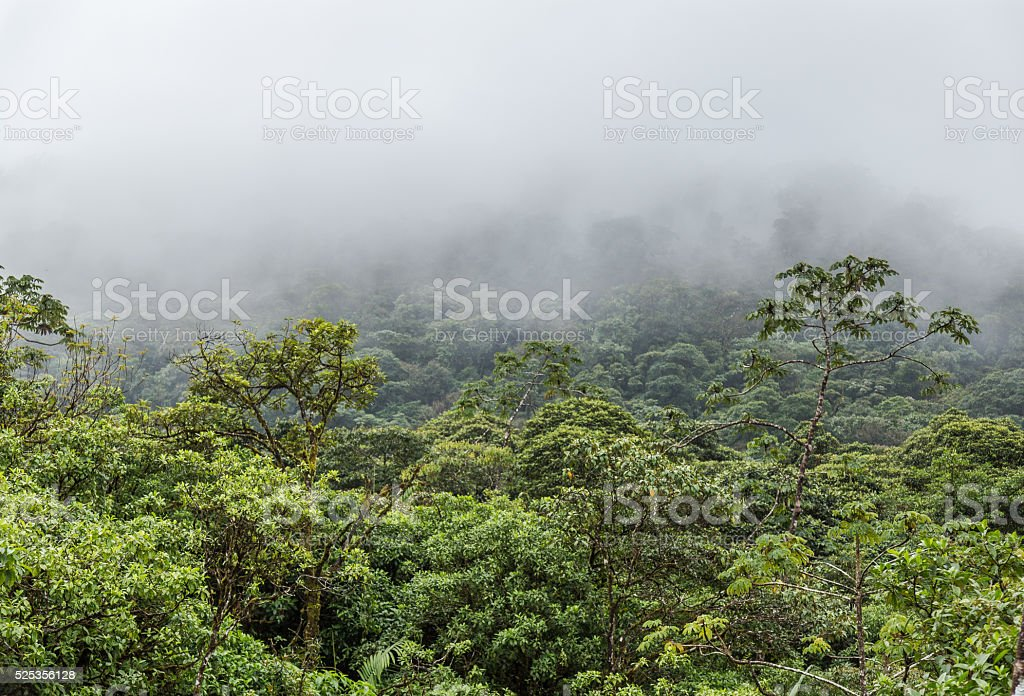 Treetops In A Cloud Forest In Costa Rica stock photo