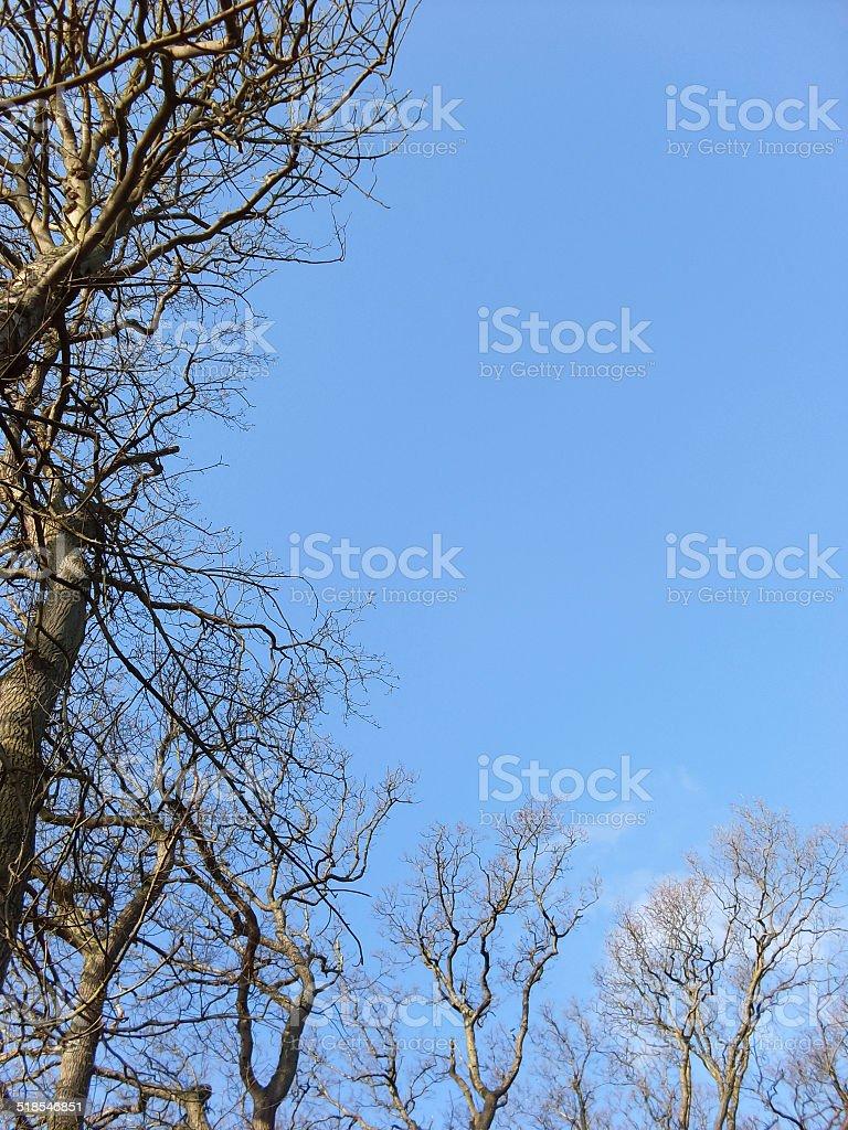Treetops in blue sky royalty-free stock photo