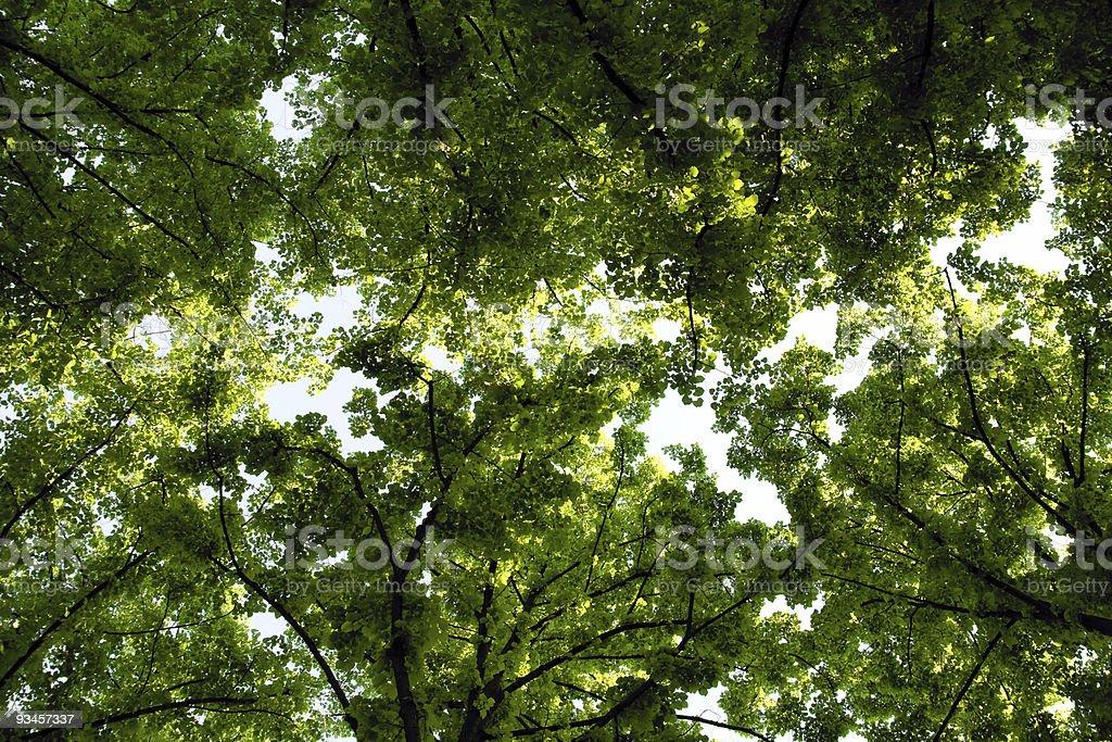 Treetops royalty-free stock photo