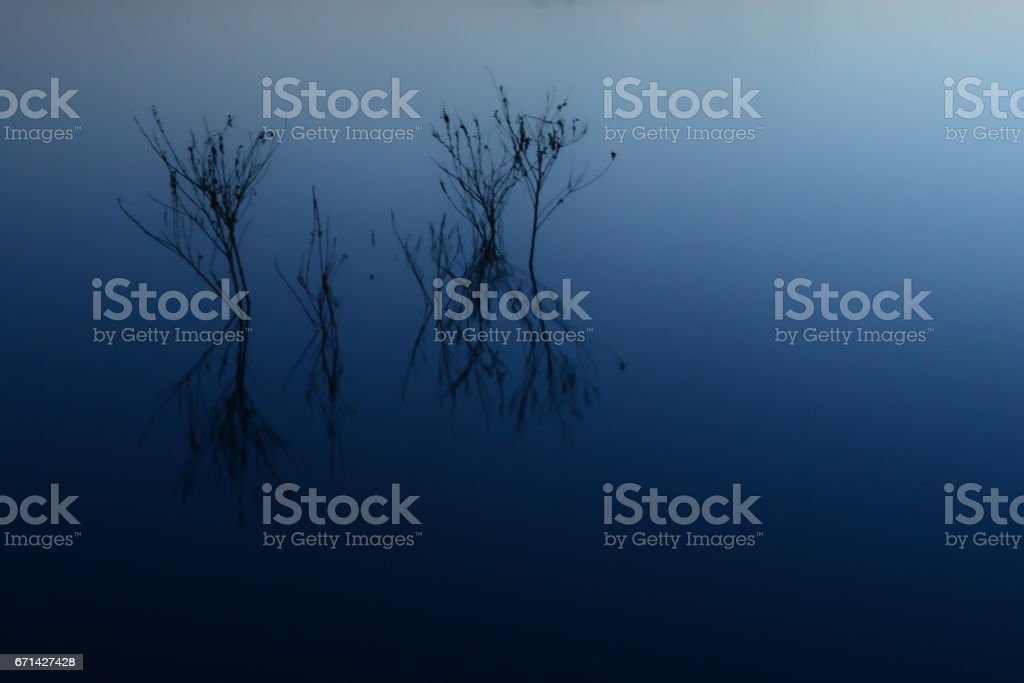 Treetops Rise from the Lake stock photo