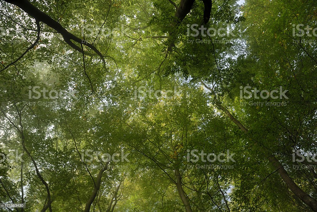 treetops with fog and first sunlight royalty-free stock photo