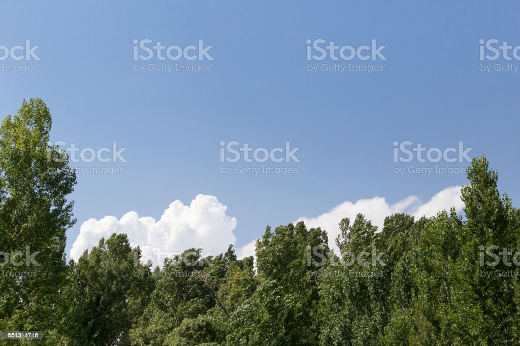 Treetops with green leaves stock photo