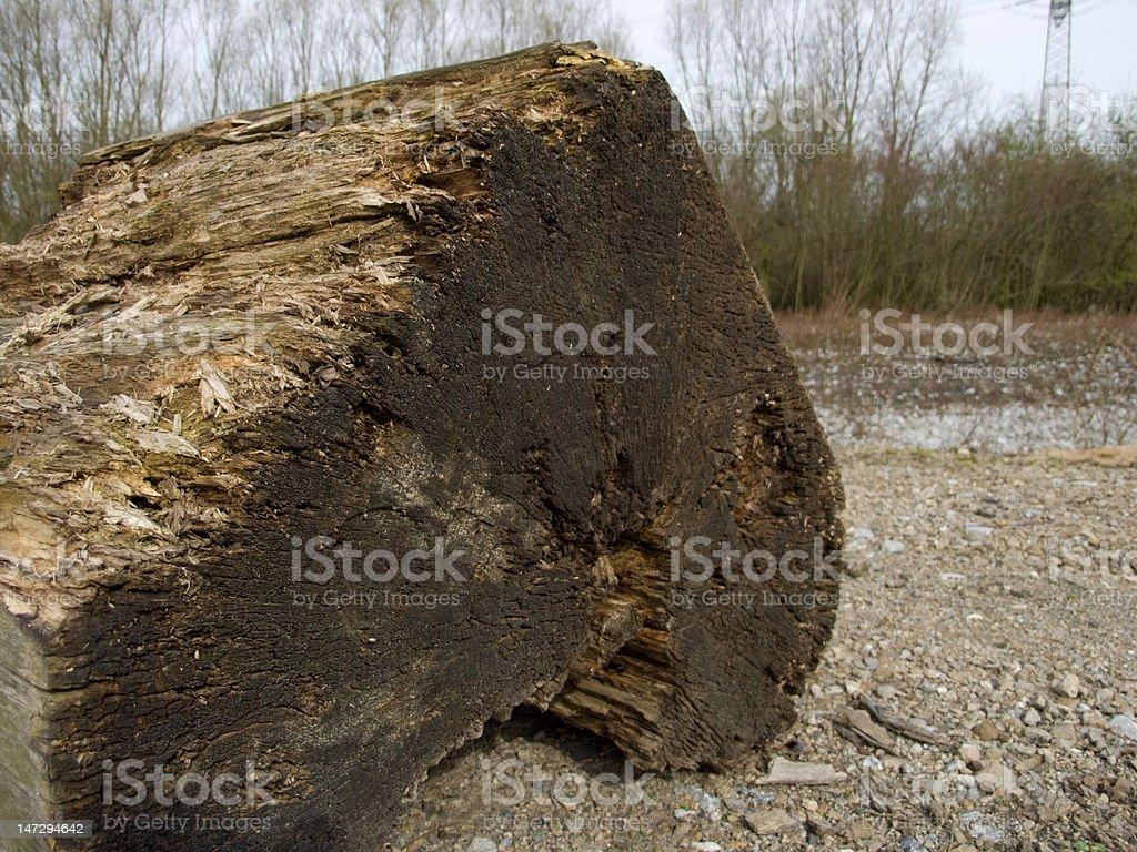 Treetrunk stock photo