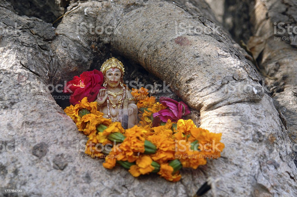 Tree-worship royalty-free stock photo