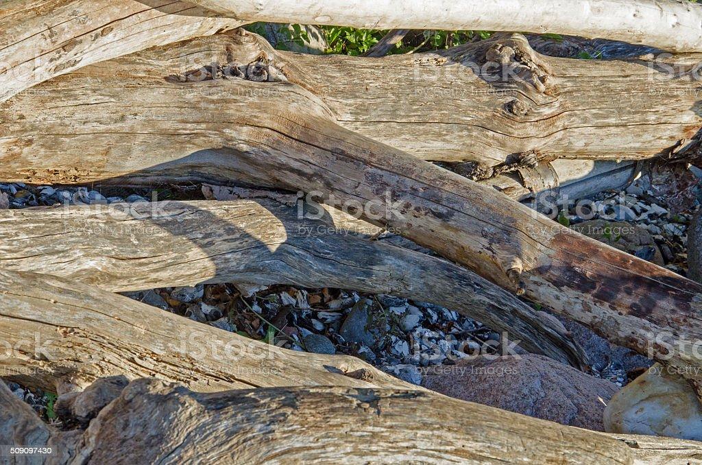Treibholz stock photo