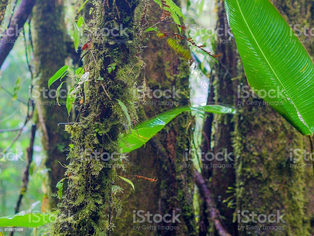 Trekkin tour in Monteverde royalty-free stock photo