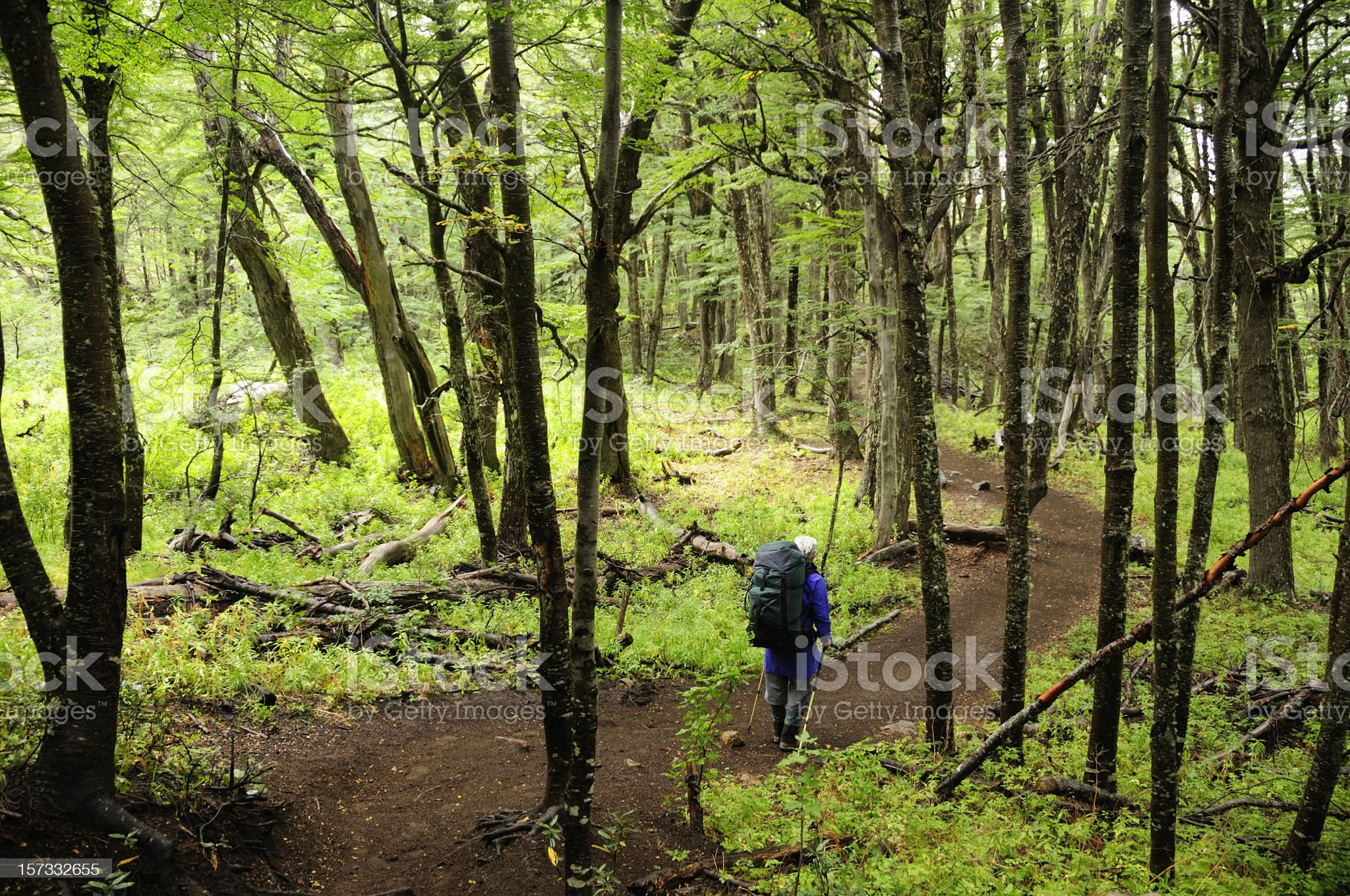 Trekking in Bariloche, Patagtonia, Argentina, South America royalty-free stock photo