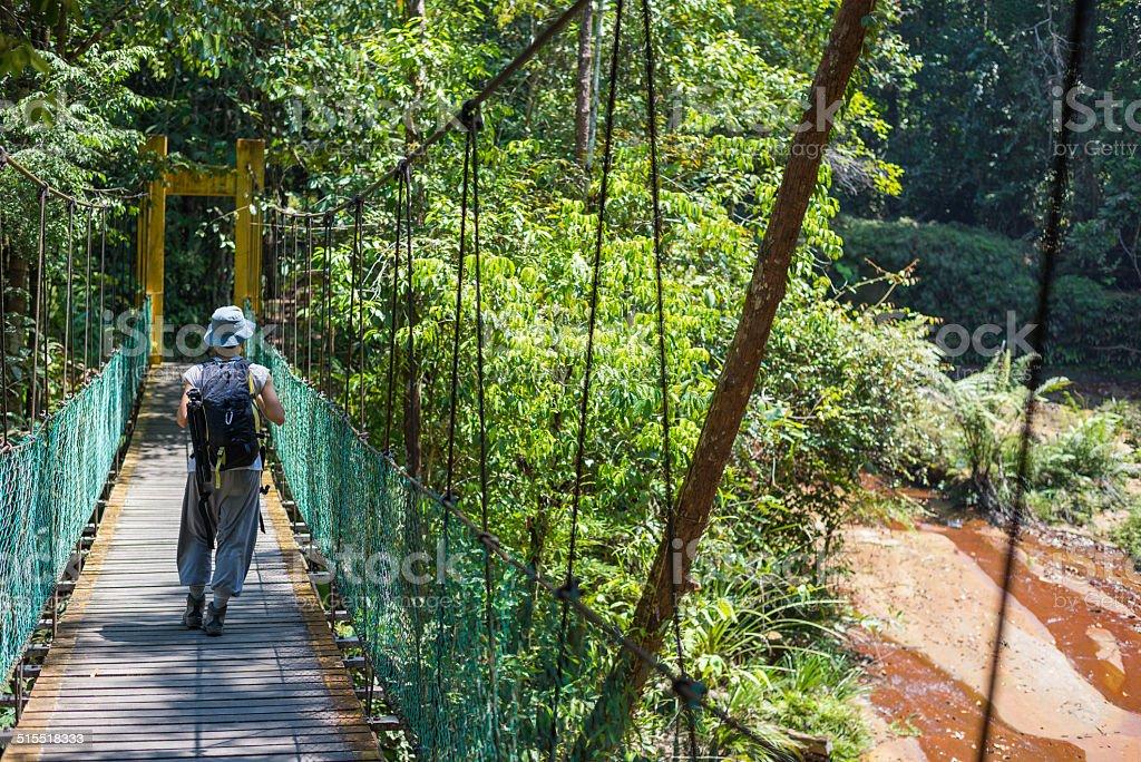 Trekking in Borneo rainforest stock photo