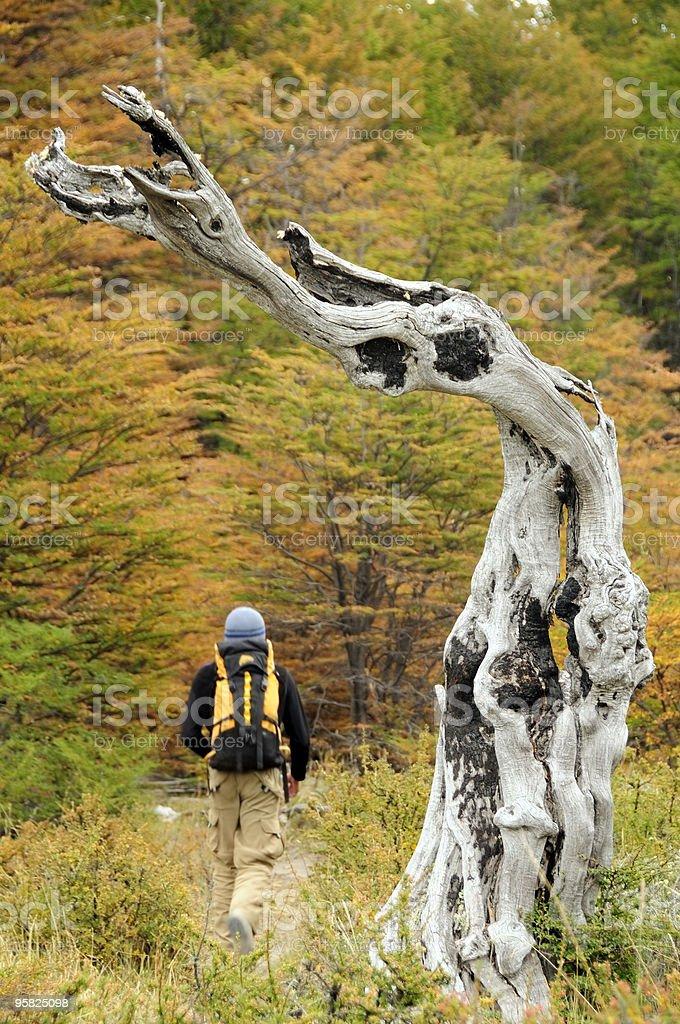 Trekking in El Chalten, Patagonia, Argentina, South America royalty-free stock photo