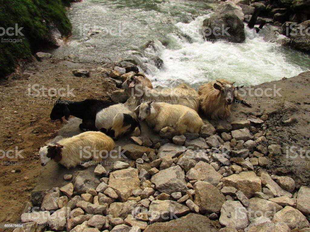 trekking in Nepal stock photo