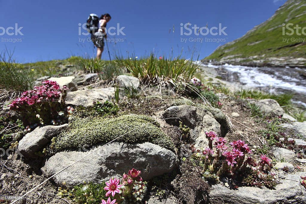 Trekking royalty-free stock photo