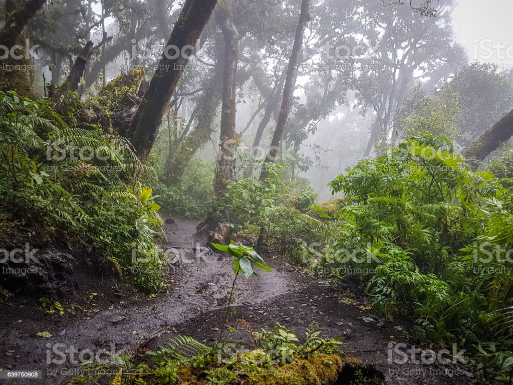 Trekking trail of  Acatenango volcano ,Guatemala stock photo