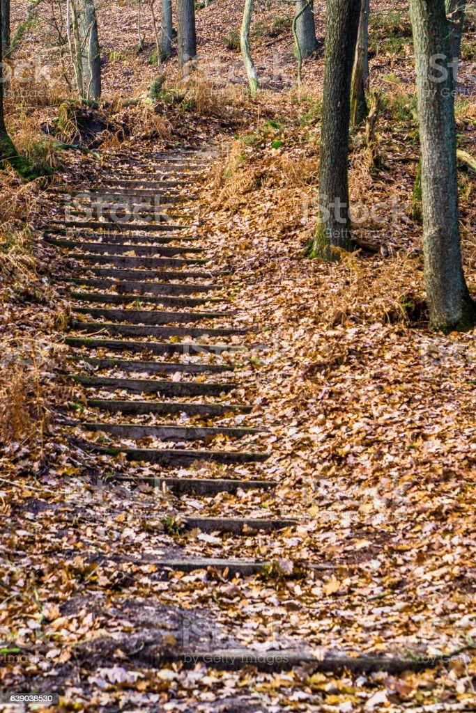 Treppe im Herbst stock photo