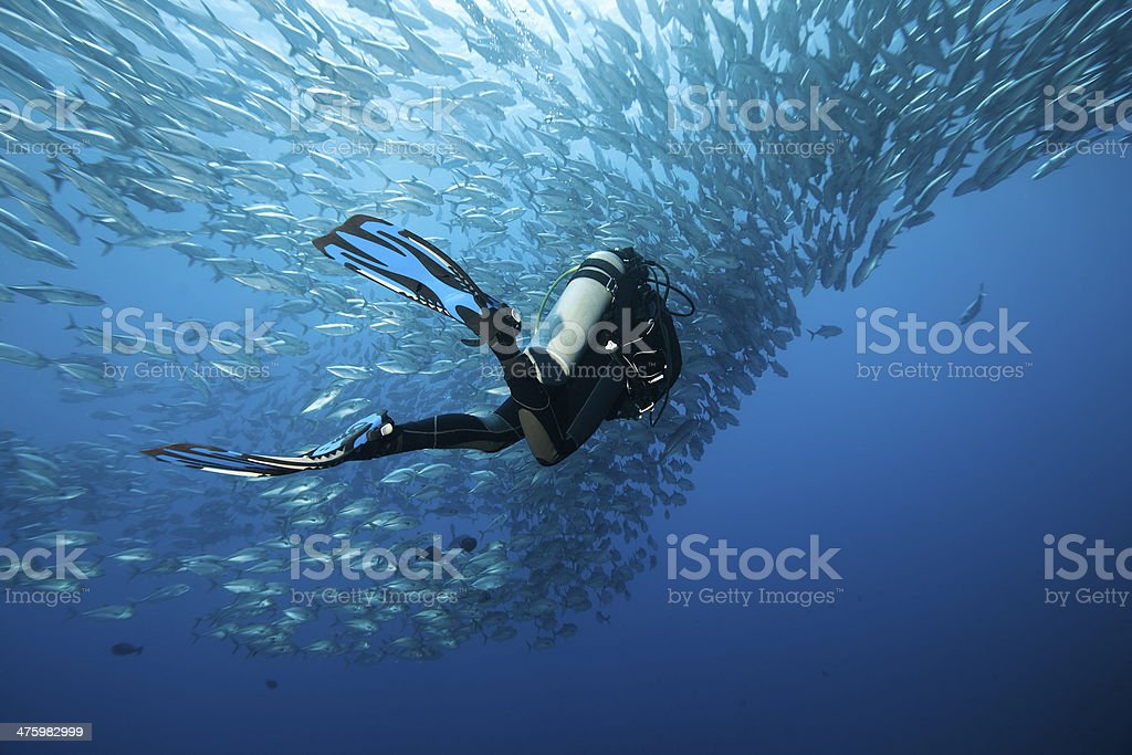 Trevally and diver royalty-free stock photo
