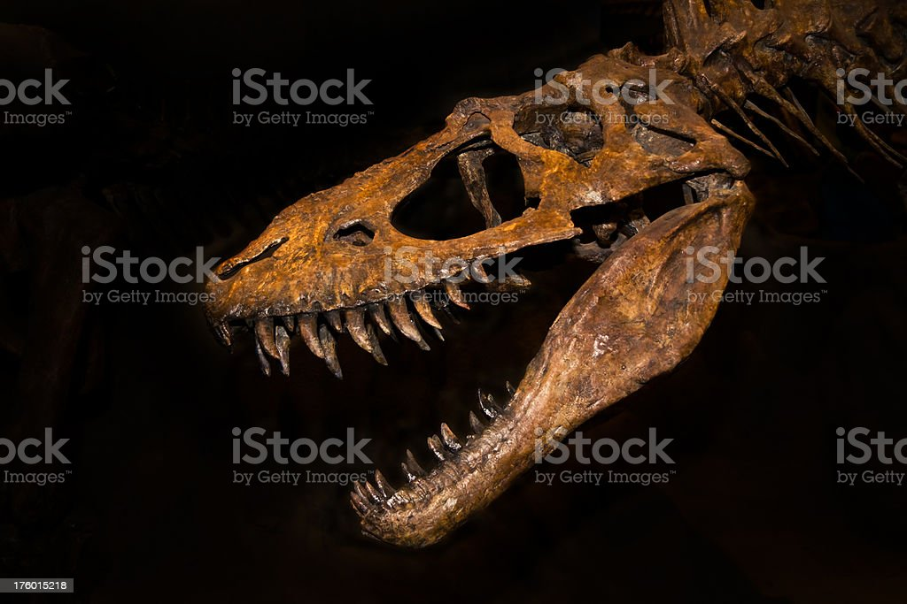 T-rex royalty-free stock photo