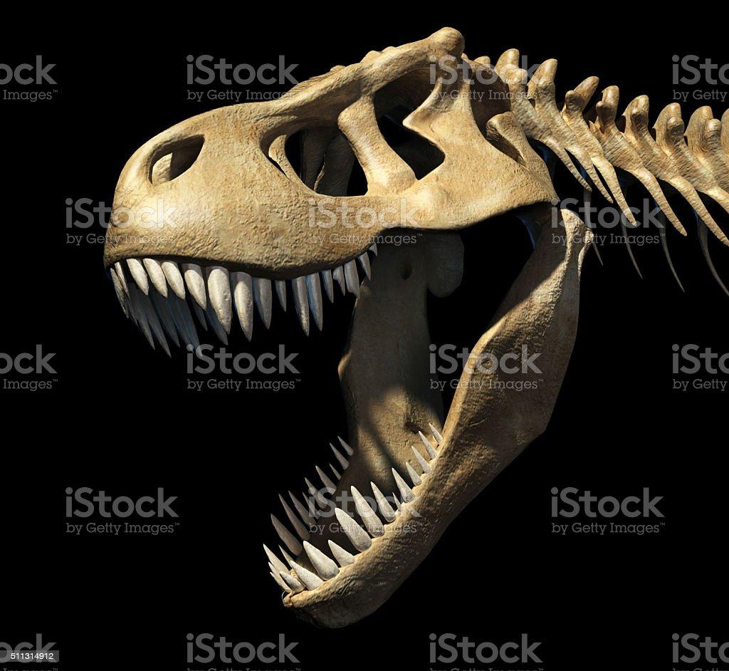 T-Rex skull close-up. stock photo