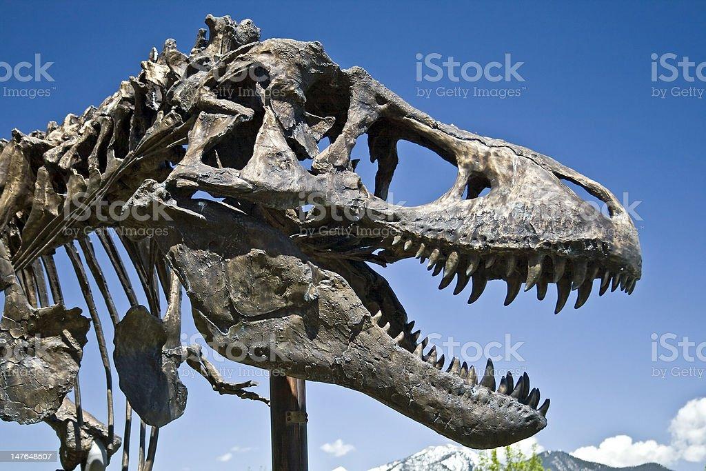 T-Rex Skull stock photo