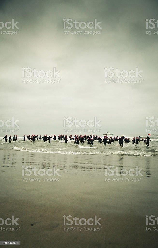 Triathletes entering the ocean stock photo