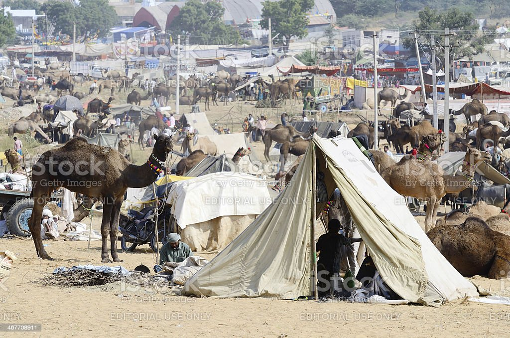 tribal people at cattle fair in nomadic camp,Pushkar,India royalty-free stock photo
