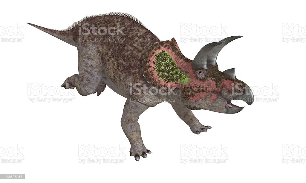 Triceratops Isolated stock photo