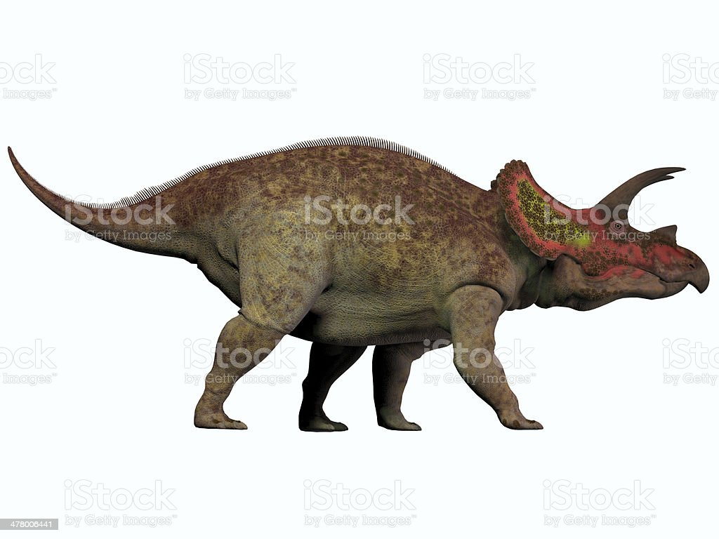 Triceratops on White royalty-free stock photo