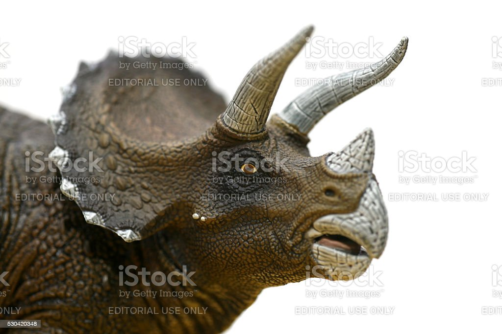 Triceratops plastic model portrait looking at camera stock photo