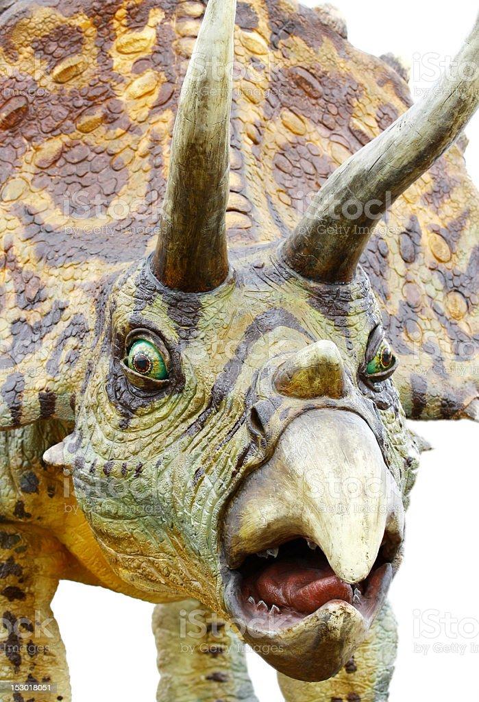 Triceratops portrait stock photo
