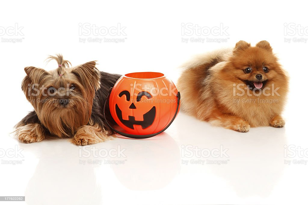 Trick or treat! royalty-free stock photo