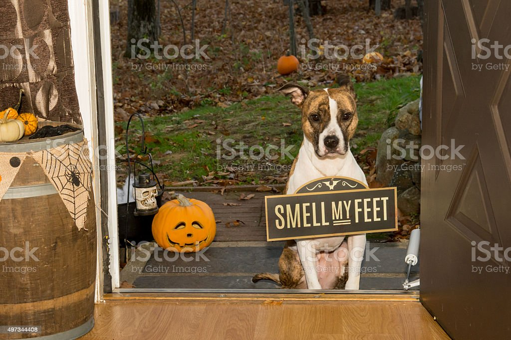 Trick or Treat...Smell my Feet stock photo
