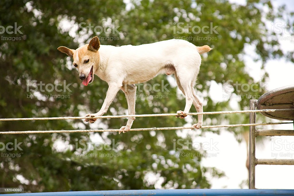 Trick Puppy royalty-free stock photo