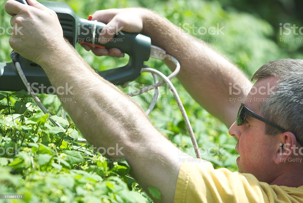 Trim the bush stock photo