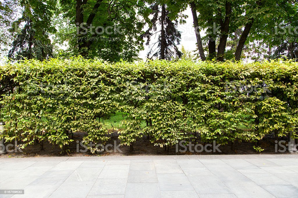 trimmed bush stock photo