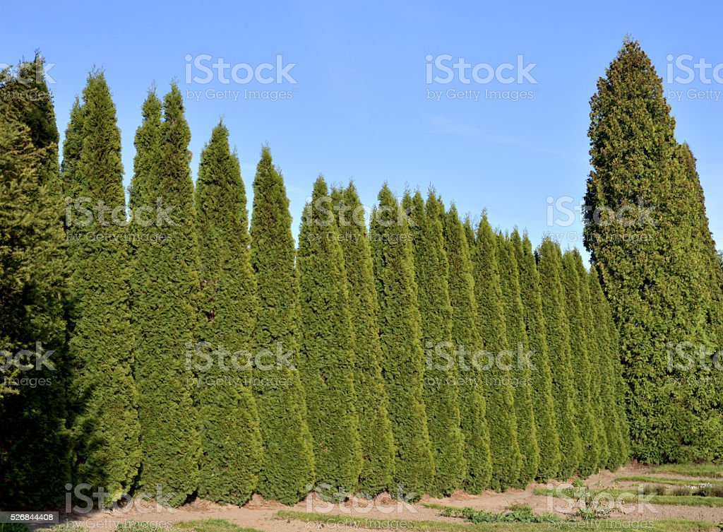 Trimmed Green Fence stock photo