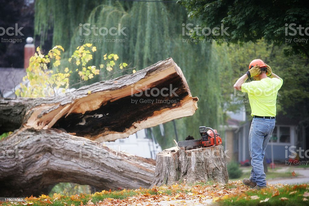 Trimmer Watching as Tree Falls stock photo