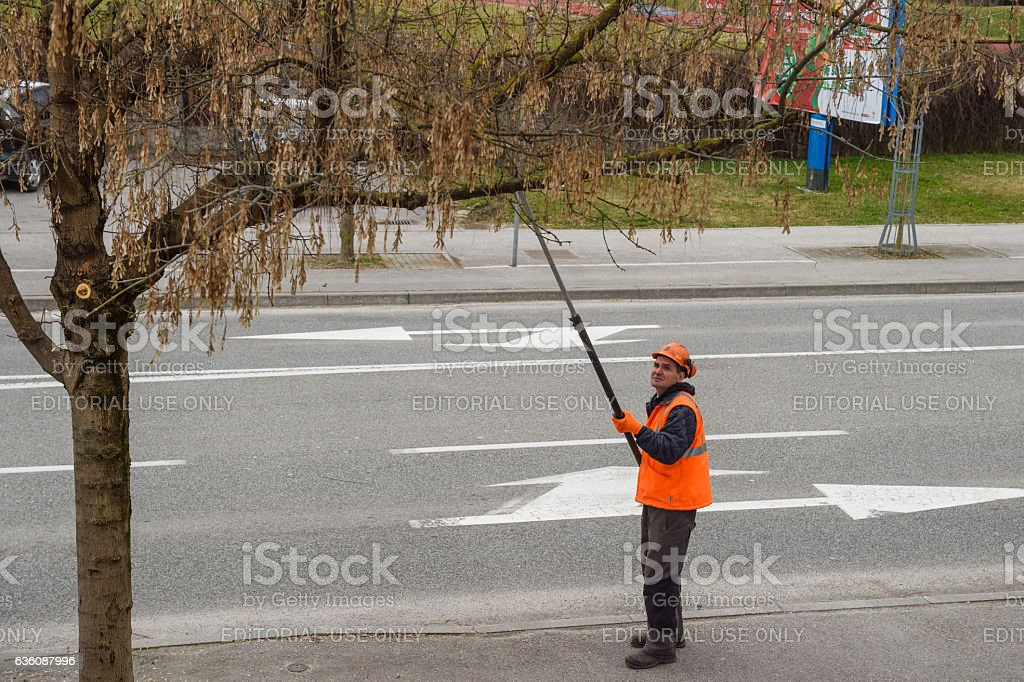 Trimming branches before spring stock photo