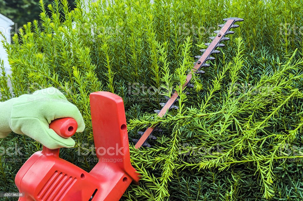 Trimming Bushes stock photo