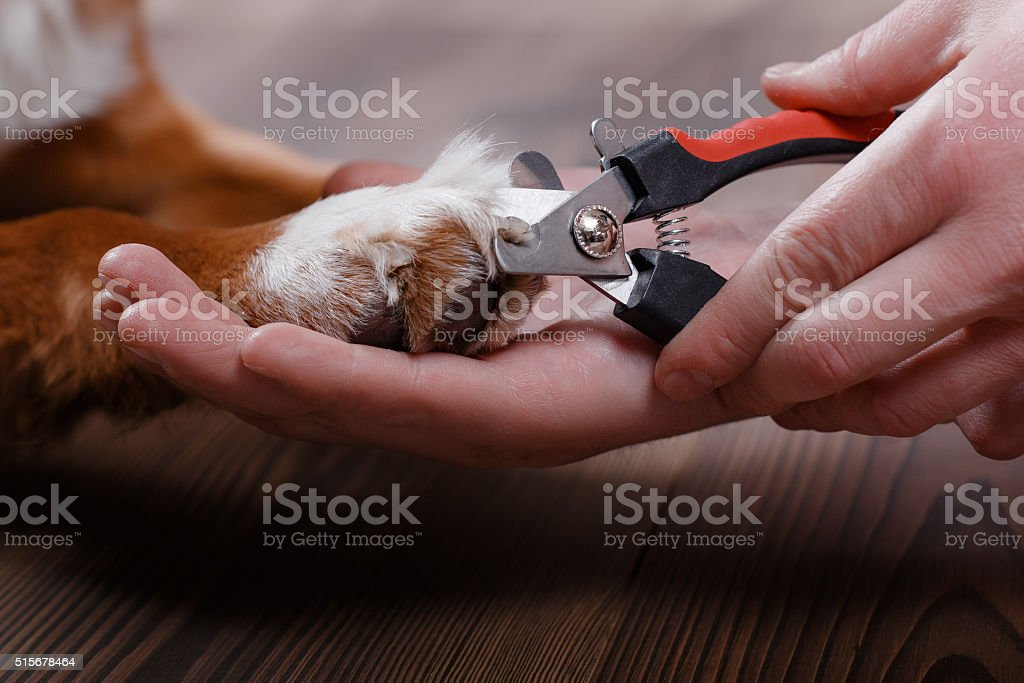 Trimming claws. Manicure and pedicure grooming stock photo
