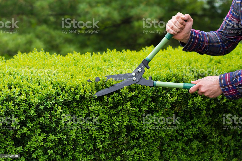 Trimming hedge row stock photo