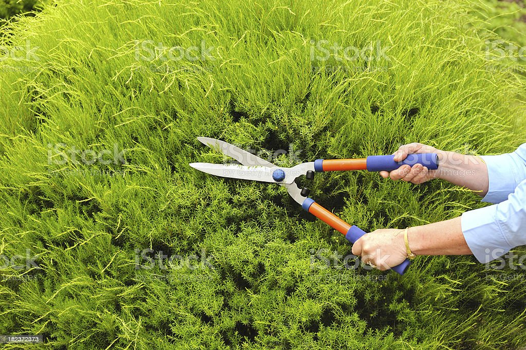 Trimming Hedges royalty-free stock photo