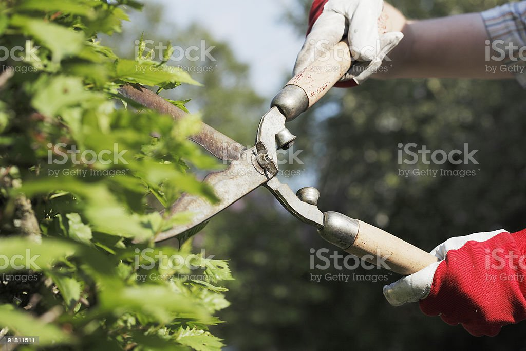 Trimming royalty-free stock photo