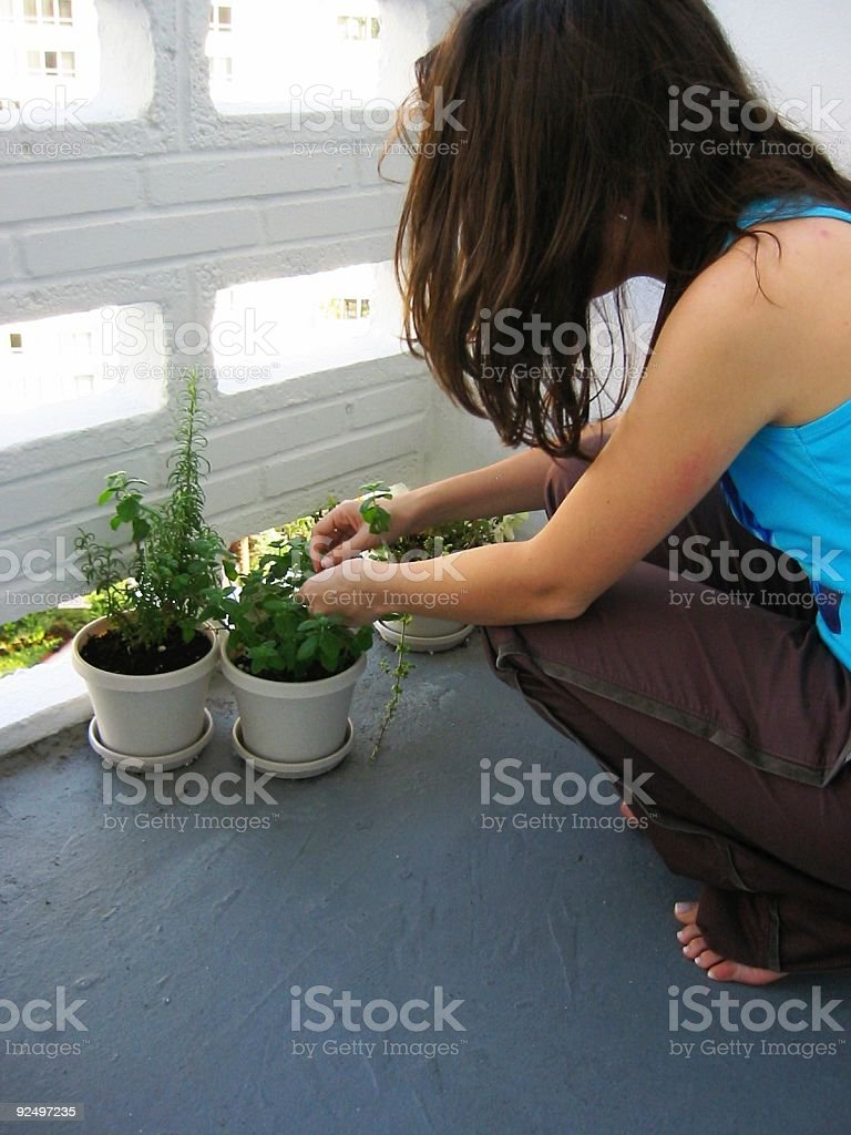 Trimming the garden royalty-free stock photo