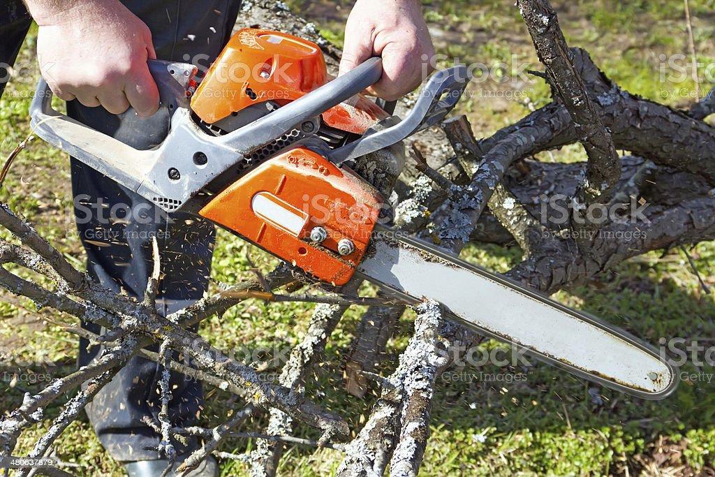 Trimming the old trees stock photo