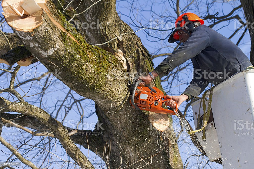 Trimming the trees stock photo